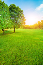 Beautiful Morning Light In Public Park With Green Grass Field Vertical Form
