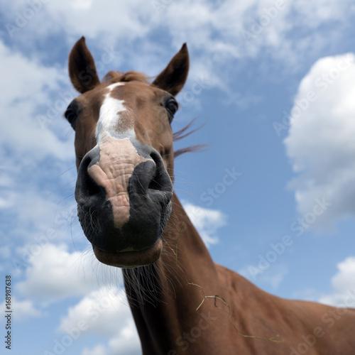 Fotobehang Giraffe head of brown horse against blue sky with clouds