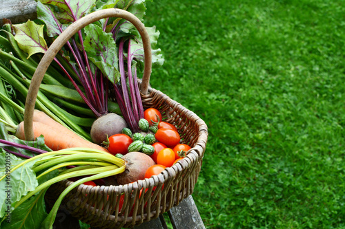 Woven basket filled with freshly harvested vegetables from an allotment Wallpaper Mural