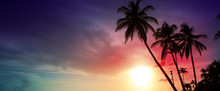 Palm Trees And Sunset On Caribean.