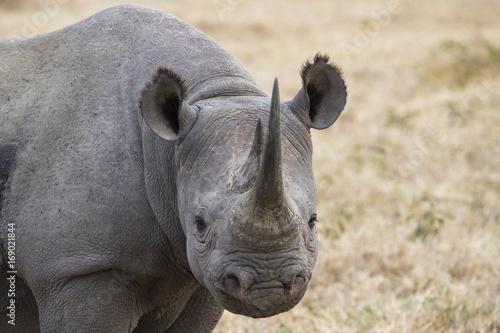Poster Rhino Portrait Nashorn