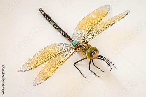Photo Dragon Fly closeup