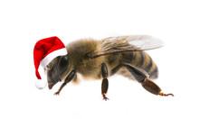 Bee With Santa Cap  Isolated O...