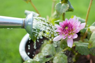 Water pouring flowers