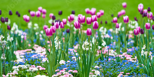 Photo  Spring flowers background. Beautiful tulip flower