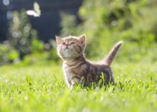 Funny Cat In Green Grass Looki...
