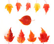Red and yellow autumn leaves in frame isolated on white background. Top view.