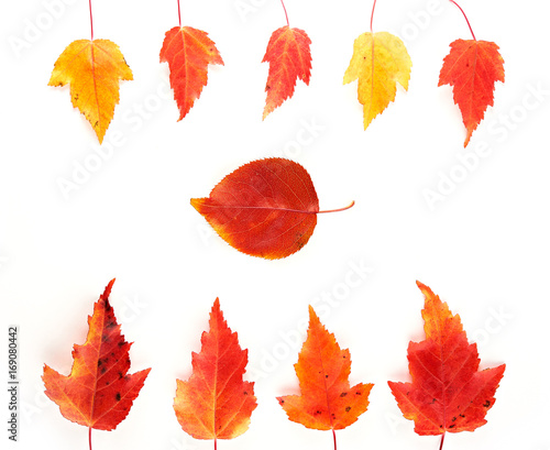 Fototapety, obrazy: Red and yellow autumn leaves in frame isolated on white background. Top view.