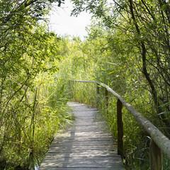 Obraz na Plexi Do łazienki Holzsteg, Wienpietschseen, Nationalpark Müritz, Mecklenburgische Seenplatte, Mecklenburg Vorpommern, Deutschland