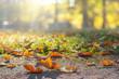 Ahornblätter liegen auf dem Boden