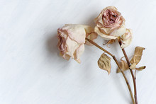 Dried Faded Roses On Old Paper...