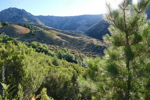 Lever du soleil sur le maquis de la montagne corse Fototapeta