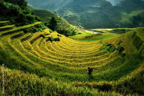 Montage in der Fensternische Reisfelder Mu Cang Chai, Vietnam landscape terraced rice field near Sapa. Mu Cang Chai rice fields stretching across mountainside in Vietnam.