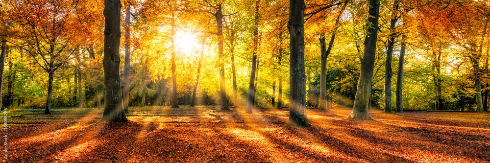Fototapety, obrazy: Goldene Herbststimmung im Wald