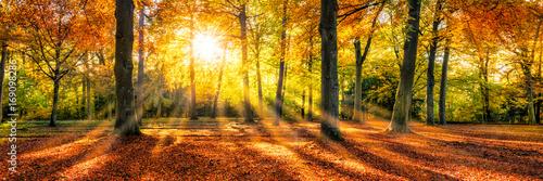 zloty-jesien-nastroj-w-lesie