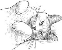 Sketch Of A Sleepy Lazy Cat
