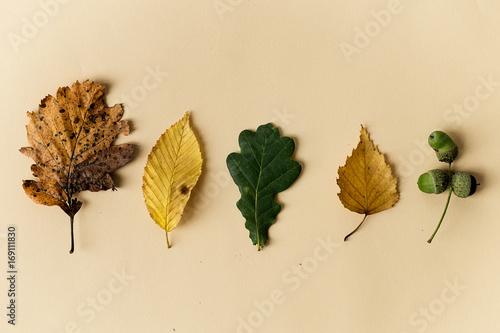 Beautiful autumn leaves on pastel background