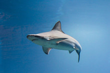 A Picturesque View Of A Shark In Motion Taking A Turn