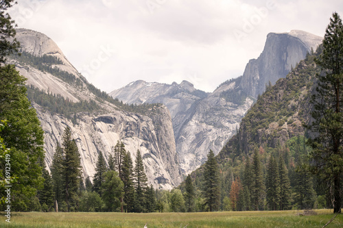 Photo  Yosemite Valley with meadow, pine trees, and view of half dome and surrounding g