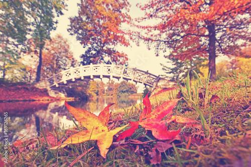Poster Corail bunte Herbstblätter im Park