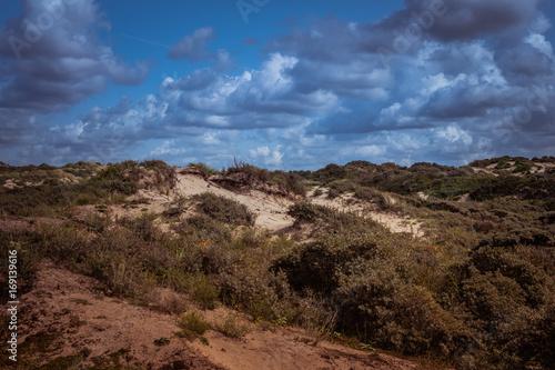 Poster Nature Dutch dunes