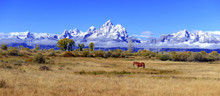 Panorama Of Lone Horse In The ...