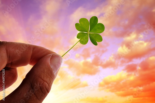 Hand holding green four leaf clover at sunset.