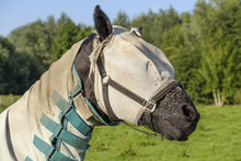 Horse With A Blanket And A Mask Against The Flies