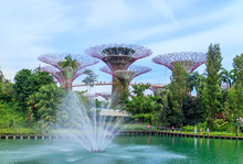 Super Tree At Garden By The Bay. A Famous Attraction In Singapore.