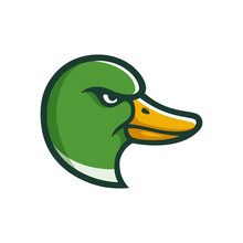 Mallard Duck Head Illustration