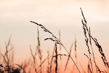 Warm Sunset Through Tall Grass...