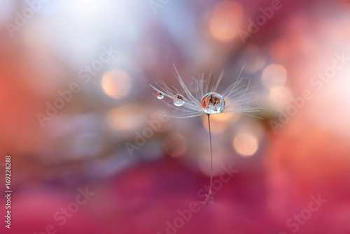 Spoed Foto op Canvas Macrofotografie Abstract Macro Photo.Dandelion Flower.Water Drops.Artistic Nature Background.Tranquil Close up Art Photography.Creative Orange Wallpaper.Floral Fantasy Design.Peach Coral Color.Plant,pure,droplet.