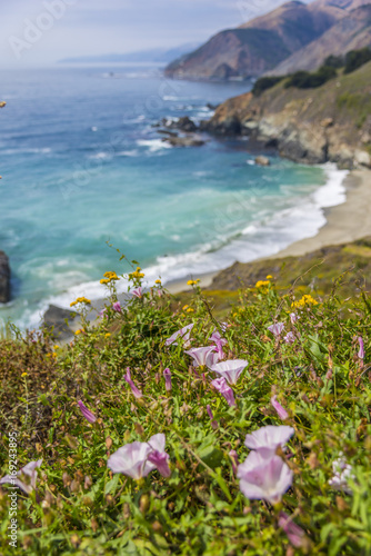 Photo Stands Melon California Pacific Coast