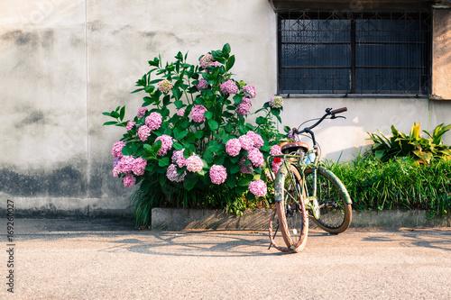 Foto op Plexiglas 紫陽花と自転車