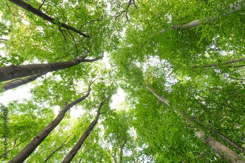 Grüne frische Baumwipfel, Harzer Wälder