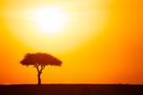 Fototapeta Sawanna - Silhouette of acacia tree against dramatic sunset