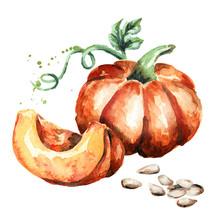 Big Pumpkin With Seeds And Green Escape. Watercolor Hand-drawn Illustration