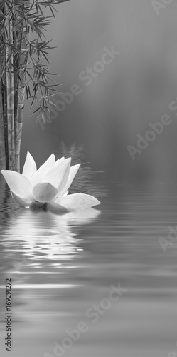 Fototapety, obrazy: lotus bambou noir et blanc