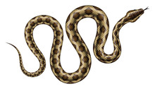 Brown Python Vector Illustrati...