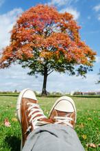 Autumn Idyllic City Getaway Spot. Red Tree And Blue Sky