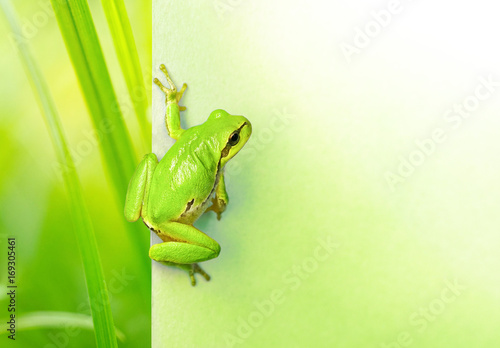 Foto op Plexiglas Kikker Creative natural background with a green frog and place for text. Original natura background with a green frog and plants close-up macro.