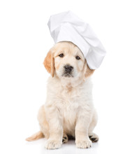 Funny Golden Retriever Puppy In Chef's Hat Looking At The Camera. Isolated On White Background