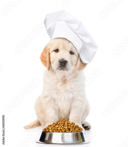 Funny golden retriever puppy in chef's hat with bowl of dry dog food. isolated on white background