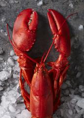 Pojedynczy czerwony homar na parze na lodzie