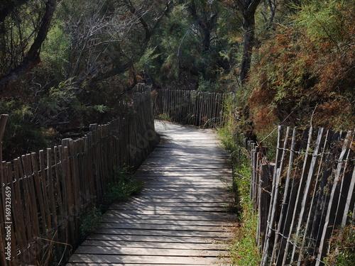 Tuinposter Weg in bos Petit chemin en latte de bois dans forêt de pins