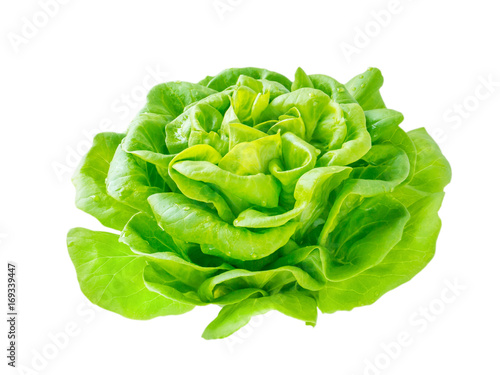 Lettuce salad rosette head with water drops
