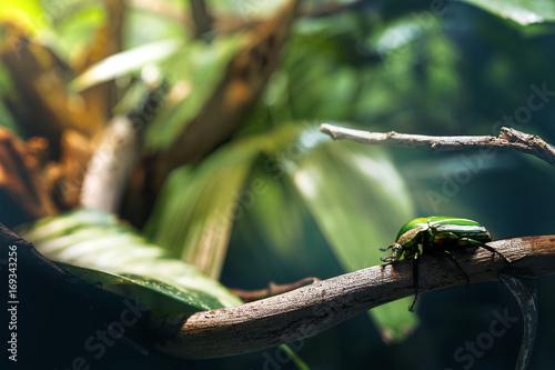 Fotografija  insetto natura verde