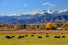 Cattle Ranch Near Boulder, Col...