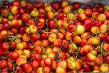 Pile Of Rainier Cherries