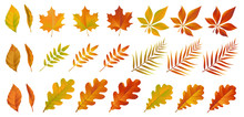 Set Of Colorful Autumn Leaves. Yellow And Red Dry Foliage Isolated On White Background. Vector Eps 10.